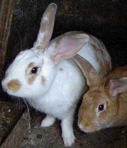 2-bunnies