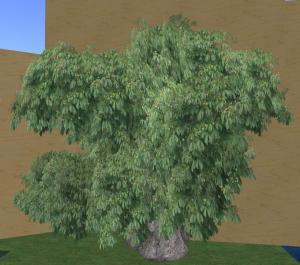mega chestnut