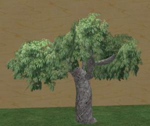 My 2nd tree - the small chestnut