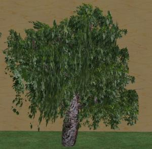 my 3rd tree - the oak