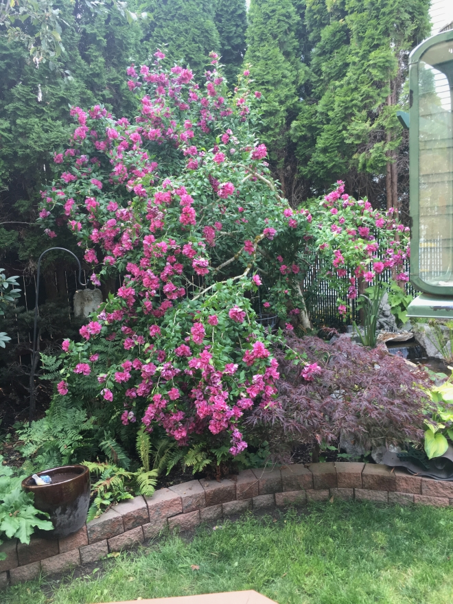 Clair garden 2