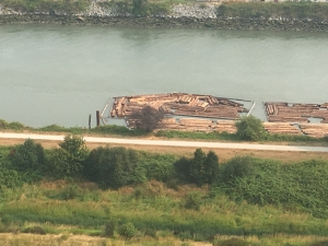 Logs being moved:stored in the river