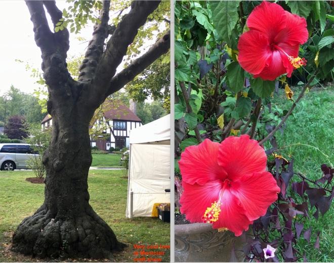 dual pic tree and hibiscus