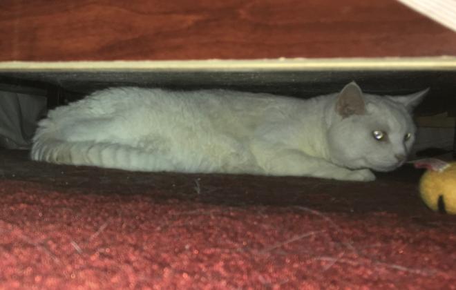 Renovation hardship cat