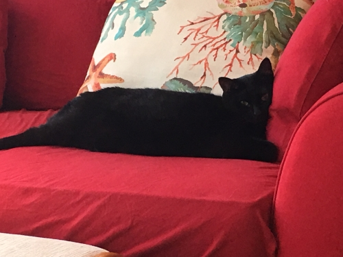 Black cat with pillows