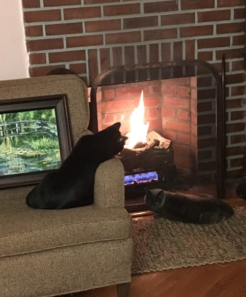 cats enjoying the fireplace