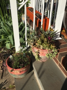 succulents and tarragon
