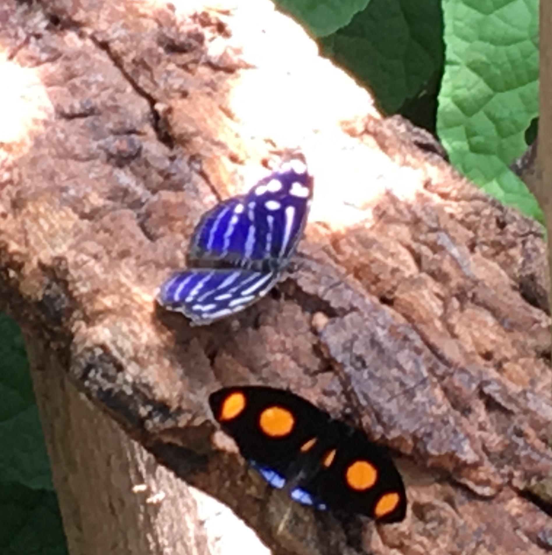 2 butterflies