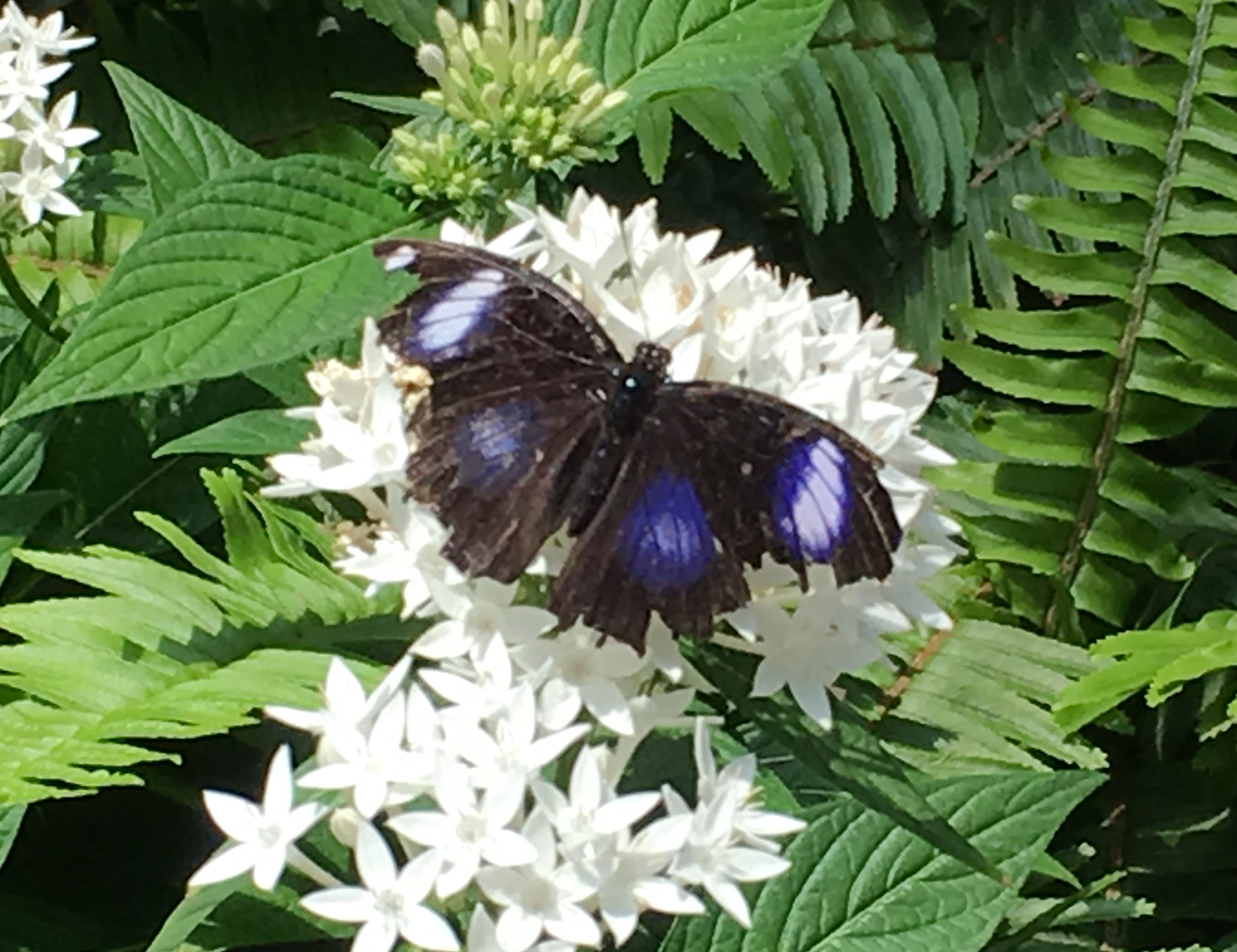 black with blue on white flower