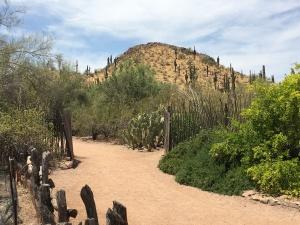 botannical garden desert hill