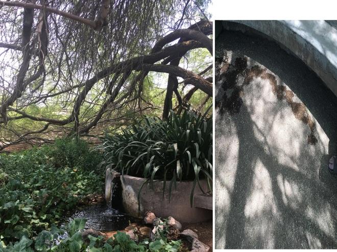 both fountain pics