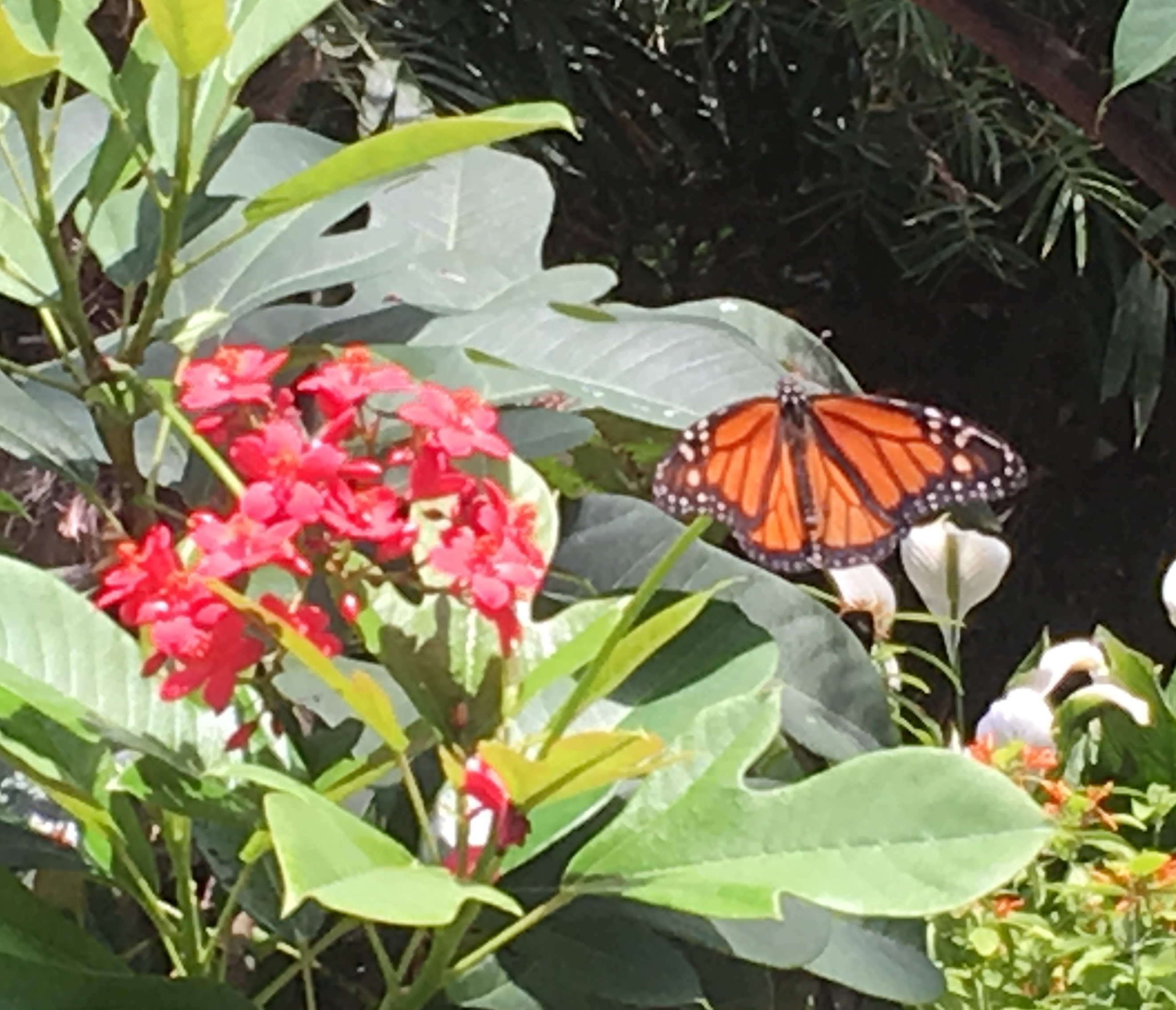 orange and black bf on red flowers