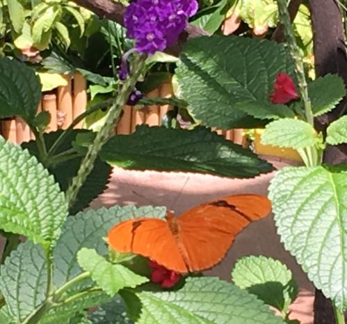 orange butterlfy with purple flower