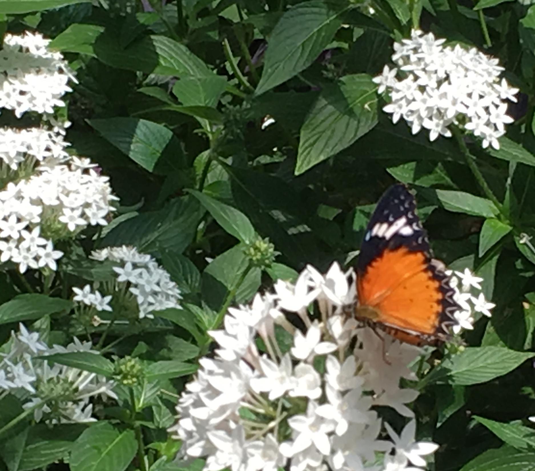 orange with black on white flowers
