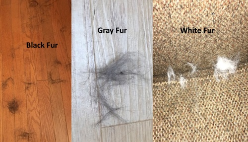 pictures of fur