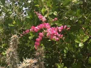 pink flowers and a cactus