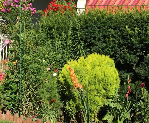 bush before