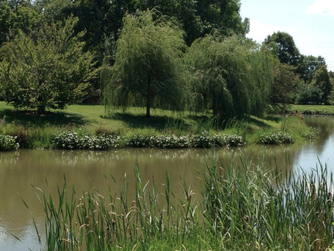 lunchtime lake