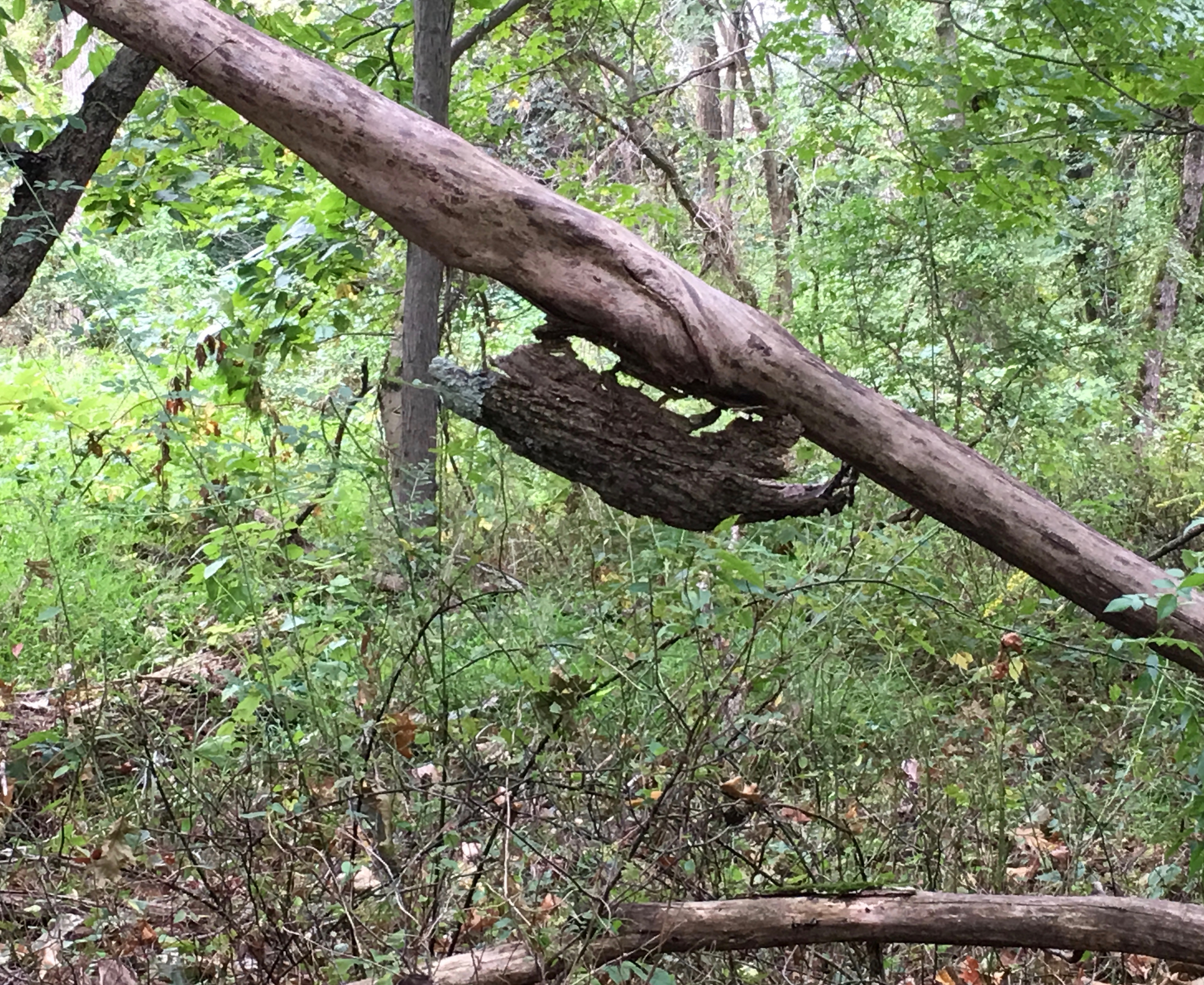 bark possum walking up the tree