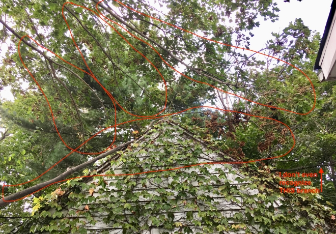 branches over hanging garage
