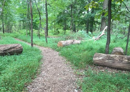 cleared path
