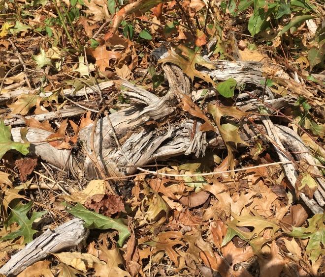 dead branch in leaves
