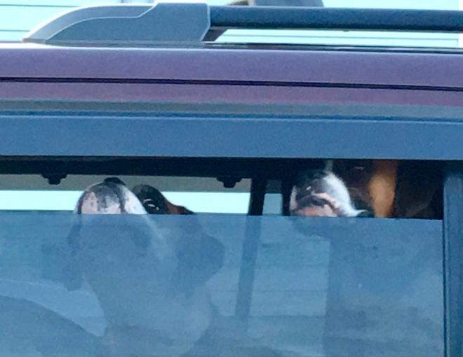 guarding their car