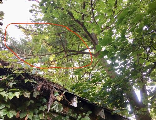 more dead branches