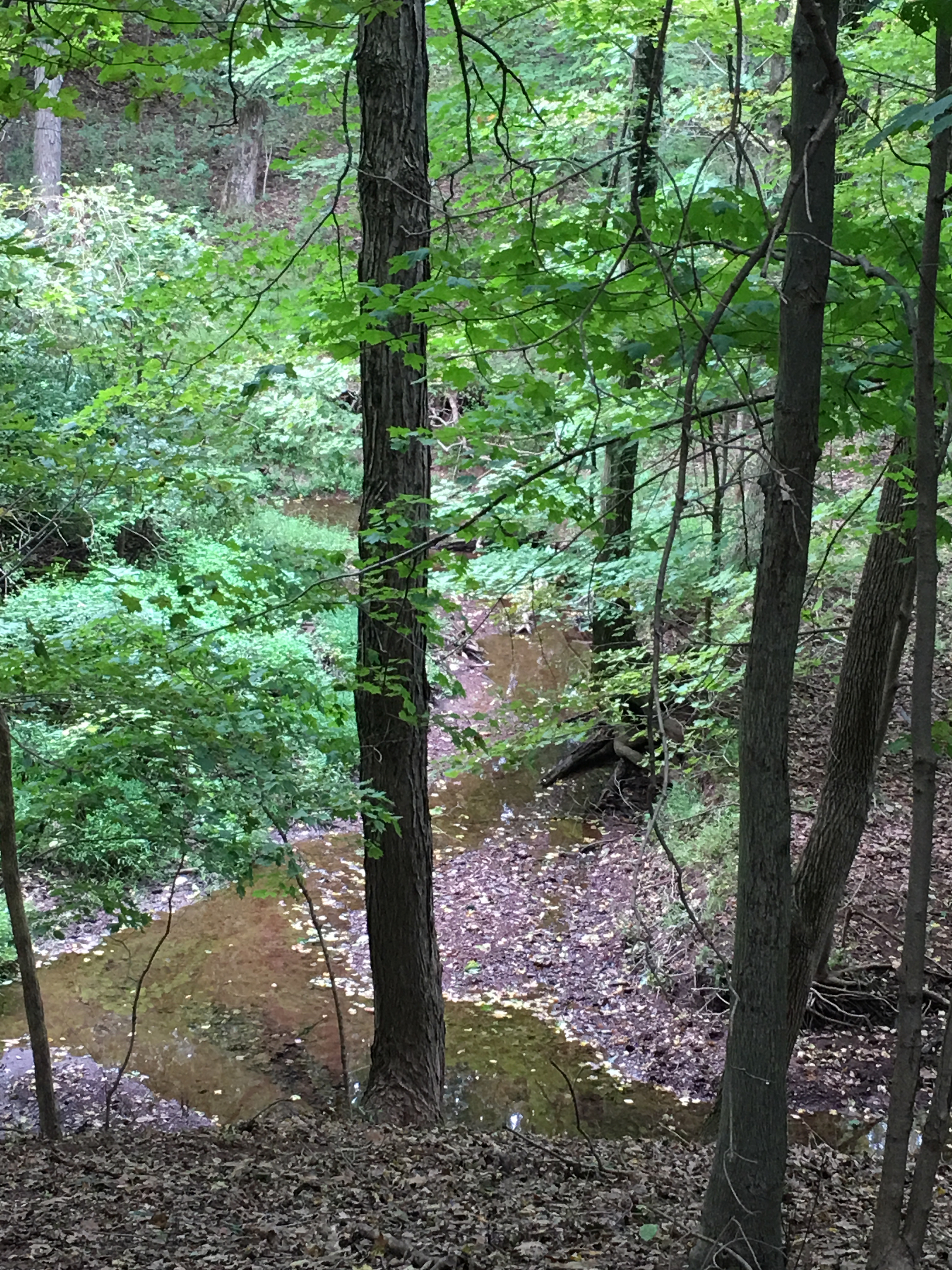 second brook