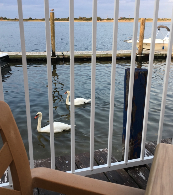 swans by table