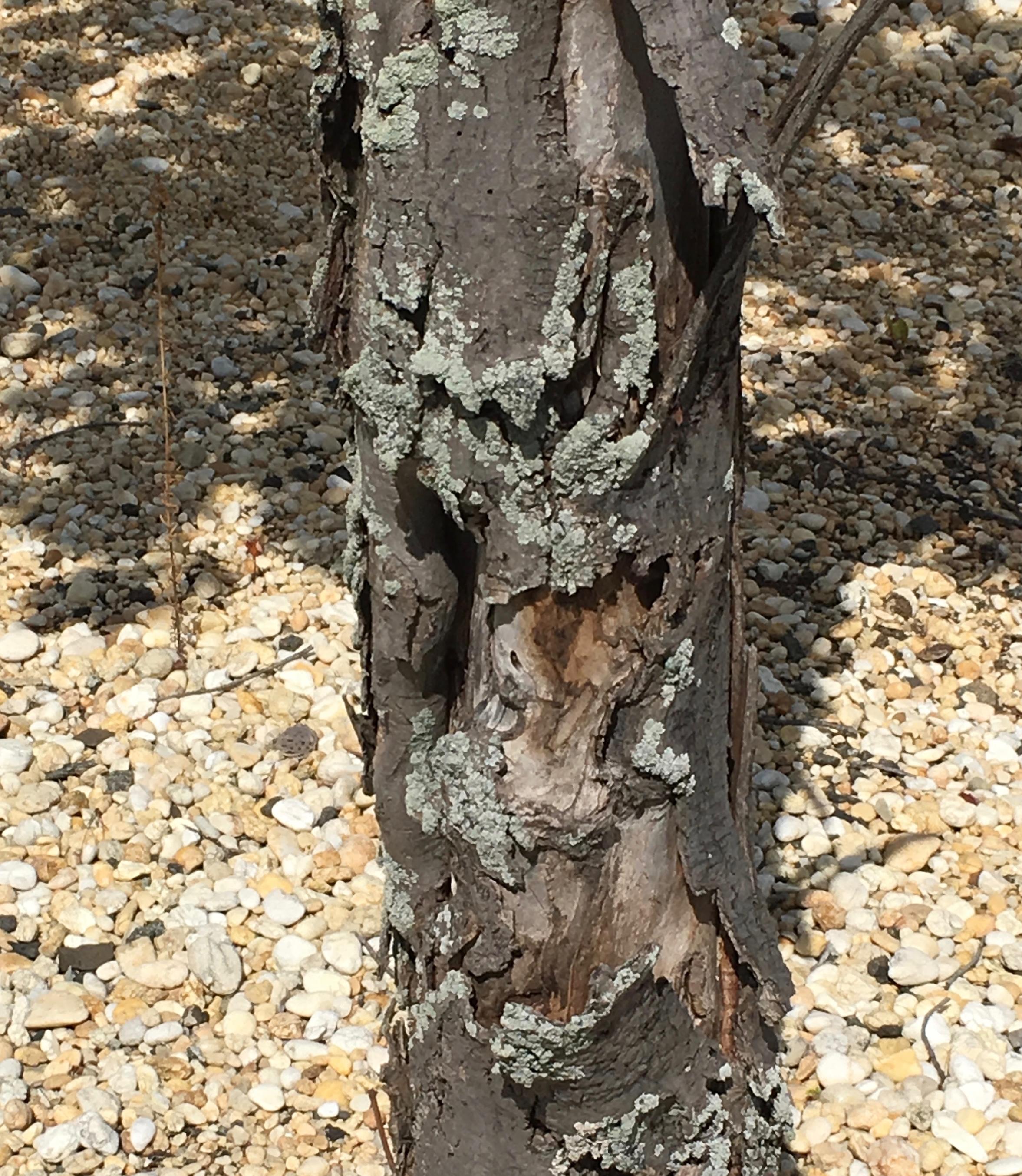 tree bark with fungus