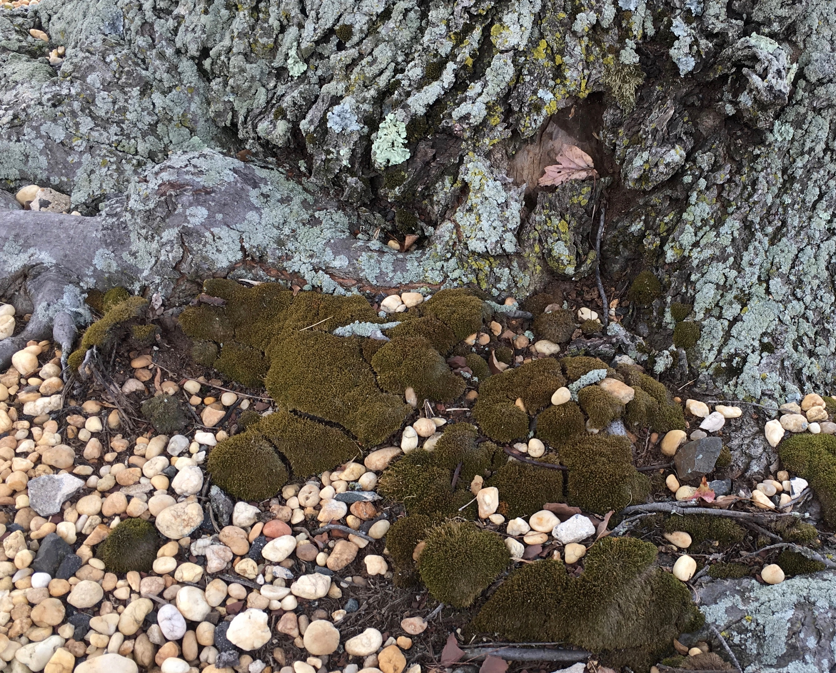tree root with moss