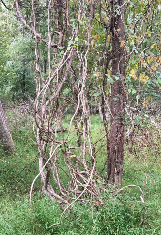 twisted vines and branches