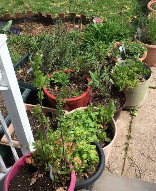 container garden 2020