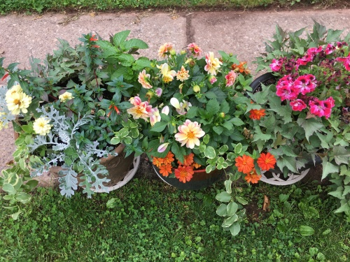 dahlias and zinniaz