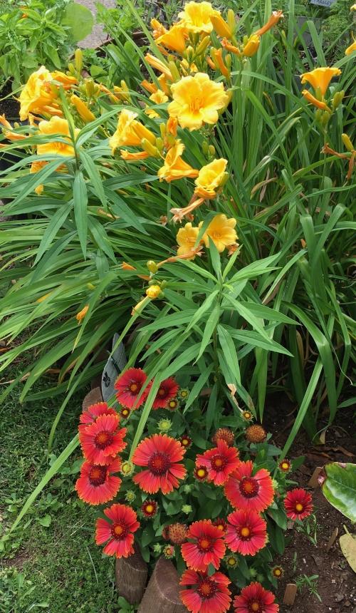 Lilies and gaillardia