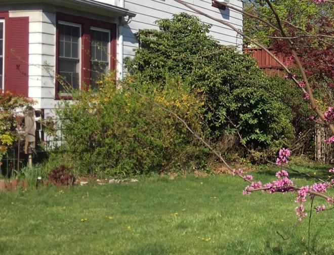 overgrown side yard