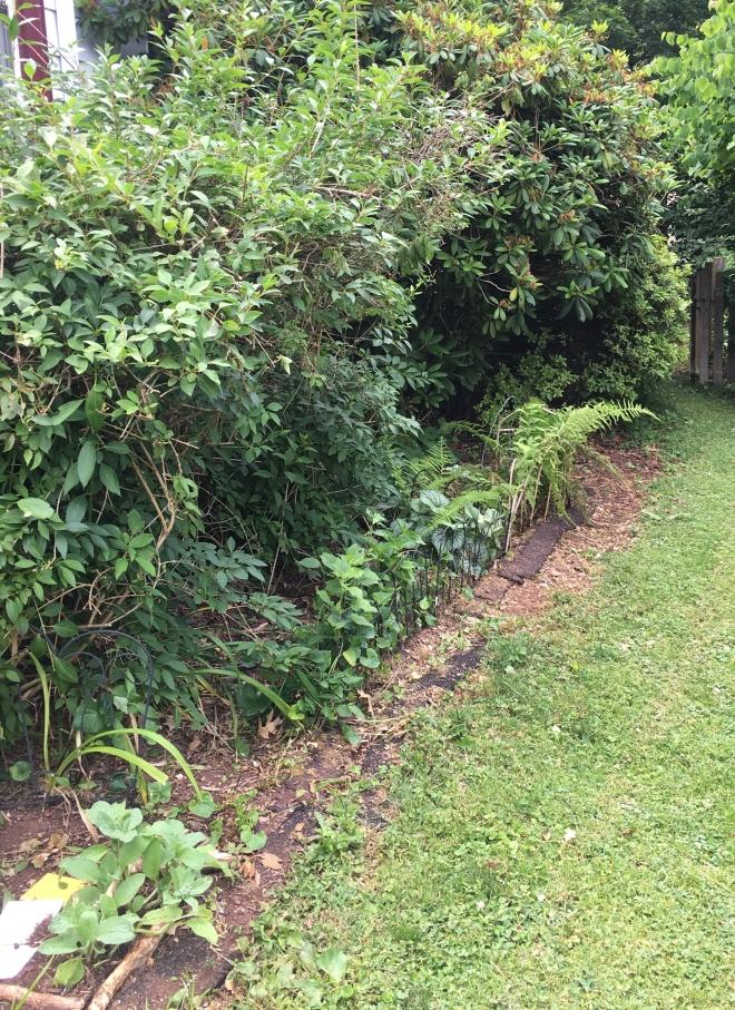 pruned side garden