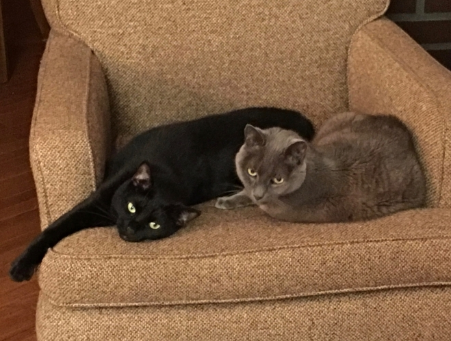 Didn't happen often but they DID get along